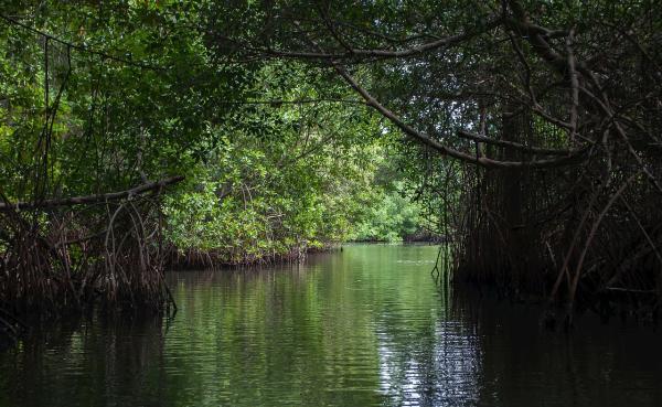 Regiones naturales de Asia - Selvas del trópico del ecuador