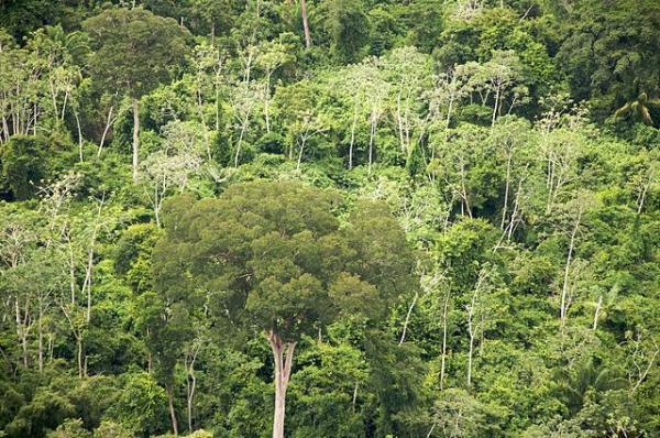 Las ecorregiones de Bolivia y sus características - Bosque seco chiquitano