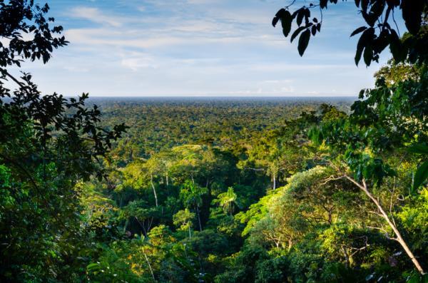Las ecorregiones de Bolivia y sus características - Bosque tropical húmedo