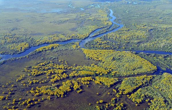 Las ecorregiones de Bolivia y sus características - Pantanal