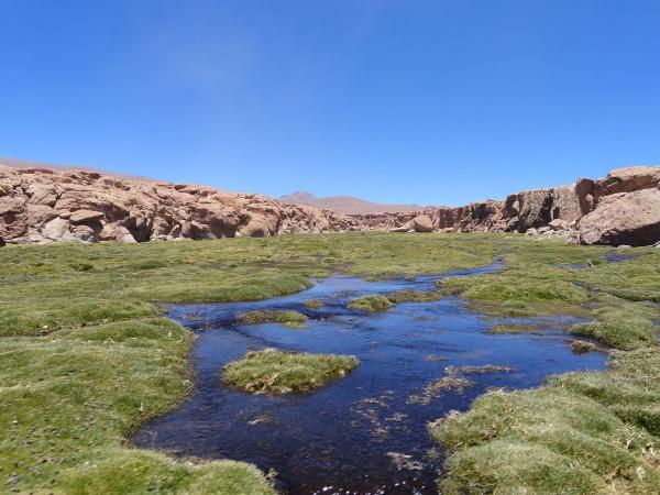 Las ecorregiones de Bolivia y sus características - Puna húmeda centro andina