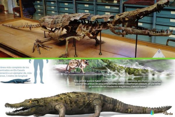 ¿Hay cocodrilos en España? - ¿Hubo cocodrilos en España?