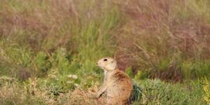 Animales de la pradera