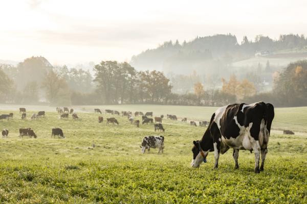 Animales de la pradera - Animales de la pradera: lista e información