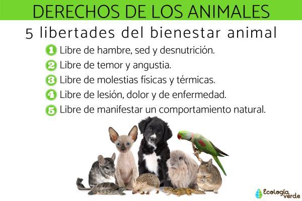 Cuáles son los derechos de los animales