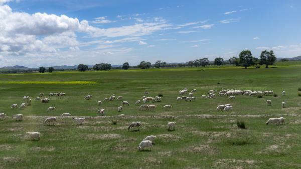 Animales de la pradera - Ecosistema de la pradera: qué es