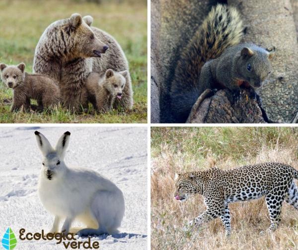 +20 animales que se camuflan - Más ejemplos de animales que se camuflan