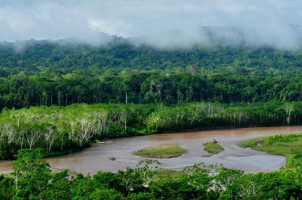 15 curiosidades de la naturaleza que te sorprenderán - El Amazonas es un lugar único
