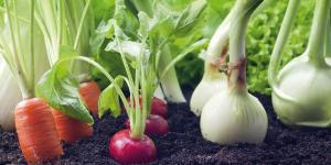 ¿Qué hortalizas plantar en verano?