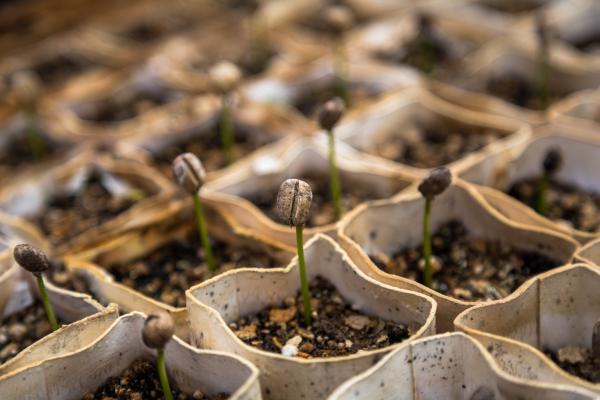 Semillas: qué son y tipos - Qué son las semillas – definición