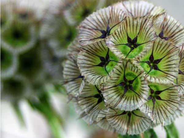 15 flores verdes