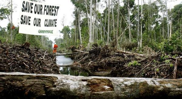 ¿Por qué Greenpeace está en contra del boicot a Nutella? - La situación de Ferrero, la marca detrás de Nutella