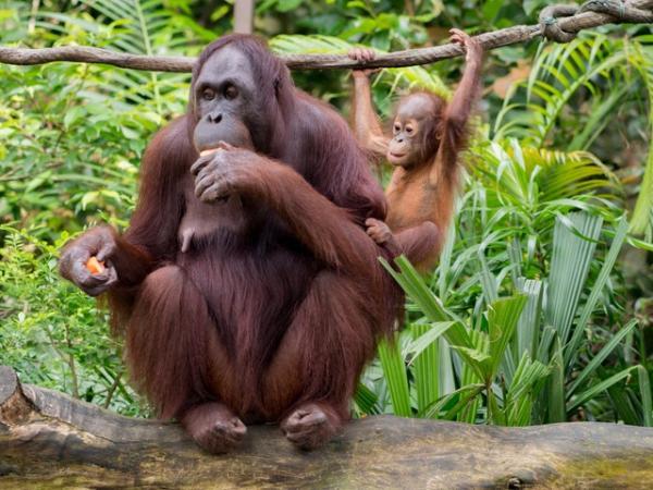 ¿Por qué Greenpeace está en contra del boicot a Nutella?