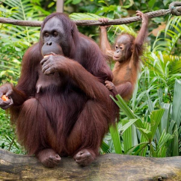 Por Qué Greenpeace Está En Contra Del Boicot A Nutella