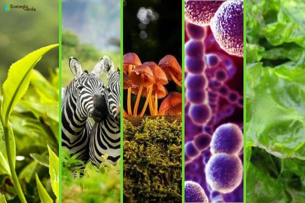 Los reinos de la naturaleza