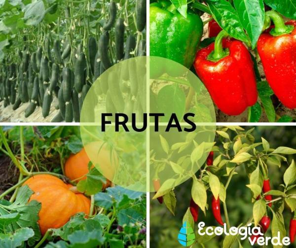 Diferencia entre fruta y verdura - Qué es una fruta y ejemplos