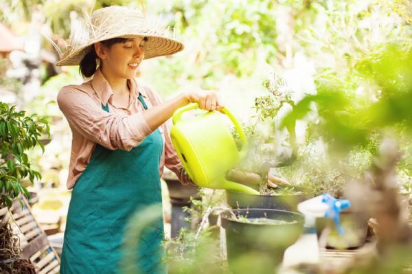 Cultivo y cuidados de la madreselva - Riego de la madreselva