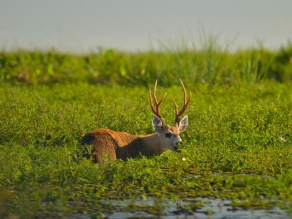 34 animales en peligro de extinción en Argentina - Más animales en peligro de extinción en Argentina