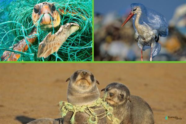 Plásticos en el mar: causas, consecuencias y soluciones - Consecuencias de los plásticos en el mar