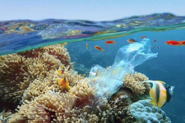 Plásticos en el mar: causas, consecuencias y soluciones
