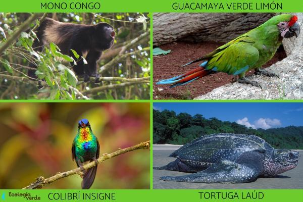 Animales de Costa Rica - Otros animales de Costa Rica