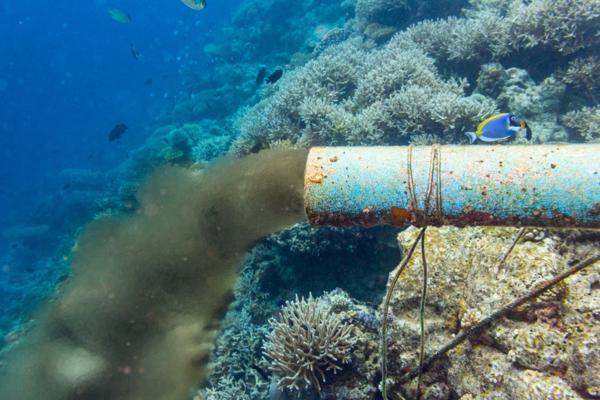 Contaminación marina: causas y consecuencias - Qué es la contaminación marina