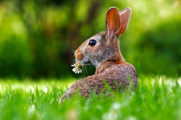 Qué es la flora y fauna