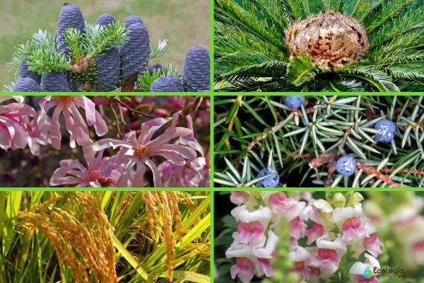 Plantas fanerógamas: qué son, características y ejemplos - Ejemplos de plantas fanerógamas