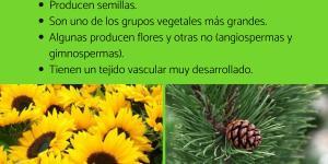 Plantas fanerógamas: qué son, características y ejemplos
