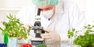 Cuáles son los alimentos transgénicos: lista de ejemplos