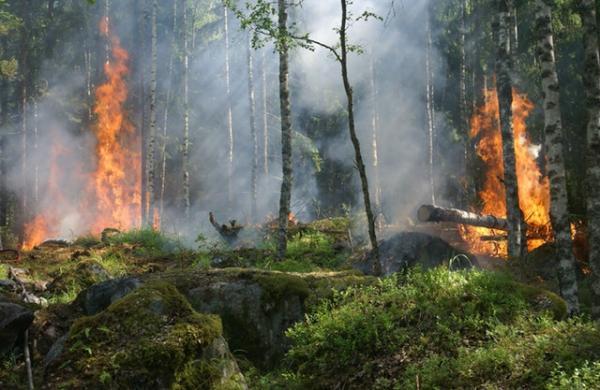 Principales problemas ambientales en Colombia - Deforestación e incendios forestales en Colombia