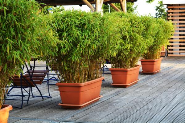 Cómo cuidar un bambú - Tierra o sustrato para el bambú
