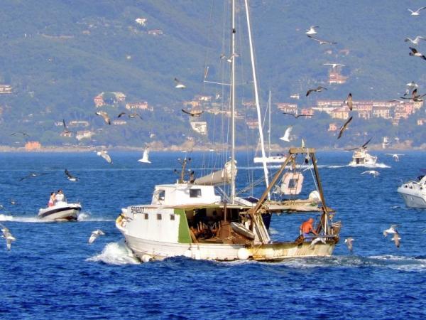 Recursos marinos: qué son, tipos y ejemplos - Importancia de los recursos marinos