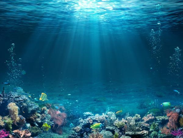 Recursos marinos: qué son, tipos y ejemplos - Qué son los recursos marinos y sus características