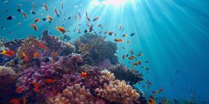 Recursos marinos: qué son, tipos y ejemplos