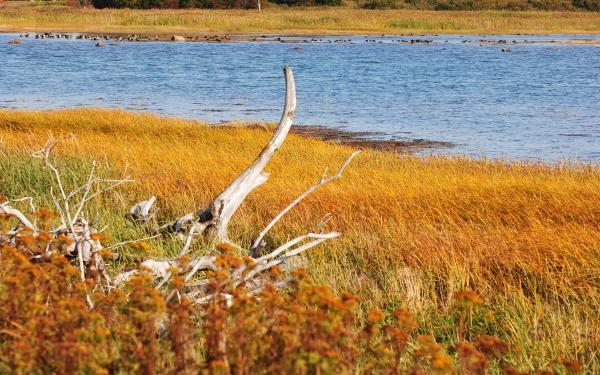 Estuarios: características, tipos, flora y fauna - Características de los estuarios