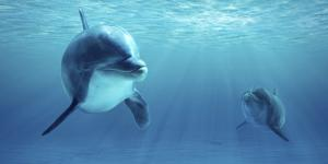 Qué comen los delfines y dónde viven