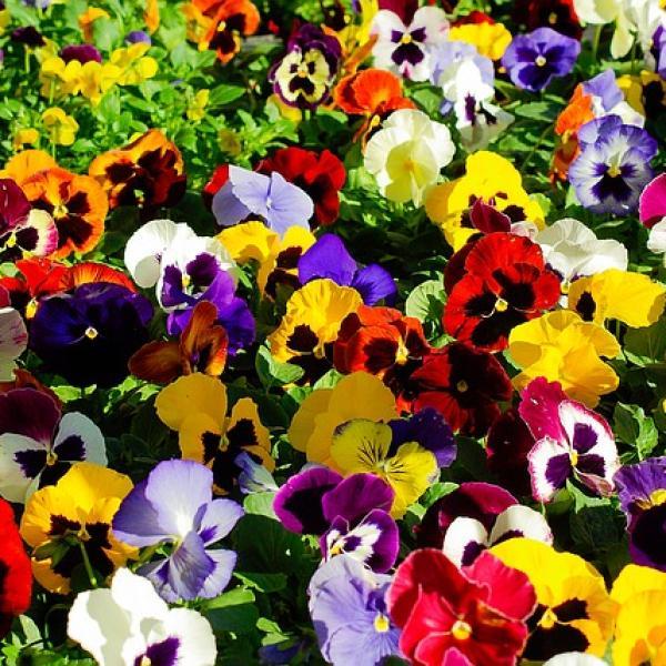 Plantas De Invierno Con Flores Para Exterior