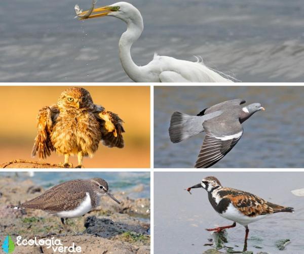 +60 animales de la costa - Animales de la costa mediterránea