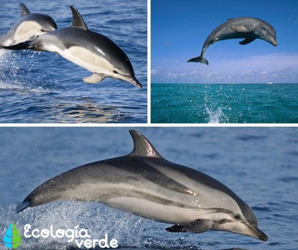 +60 animales de la costa - Delfines, unos de los animales de la costa más conocidos