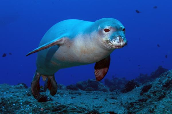 Diferencias entre león marino, foca y morsa - Características de las focas