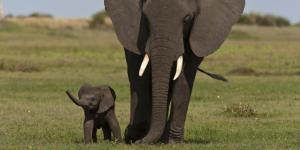 Algunas curiosidades del reino animal