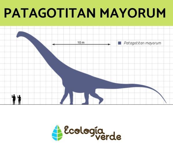 Dinosaurios herbívoros: nombres, tipos, características e imágenes - Patagotitan Mayorum