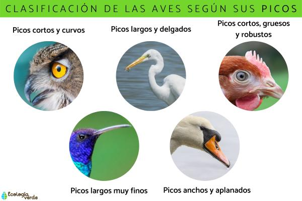 Clasificación de las aves - Clasificación de las aves según su anatomía