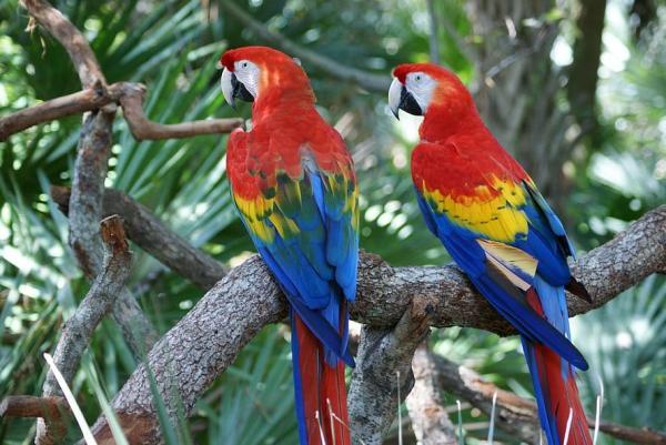 Clasificación de las aves - Clasificación de las aves según su hábitat