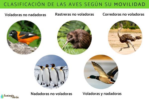 Clasificación de las aves - Clasificación de las aves según su movilidad