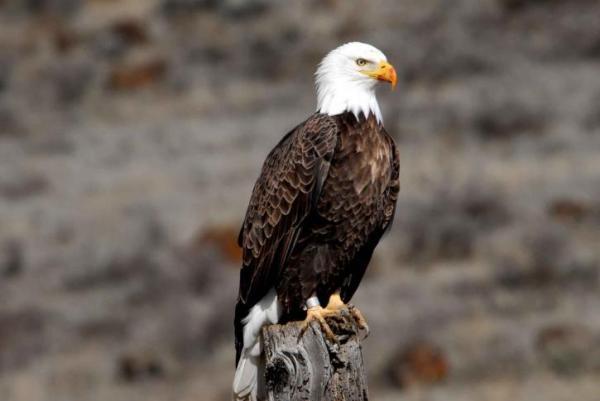 Clasificación de las aves - Clasificación de las aves según su orden
