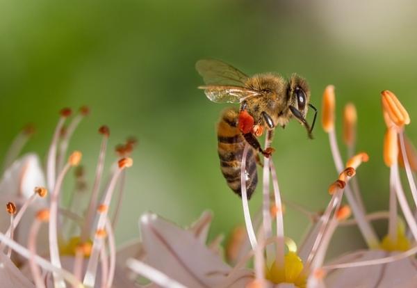 Qué son los neonicotinoides y su efecto en las abejas
