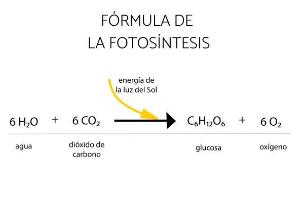 Fotosíntesis: qué es, proceso e importancia - Qué es la fotosíntesis y cuál es su función
