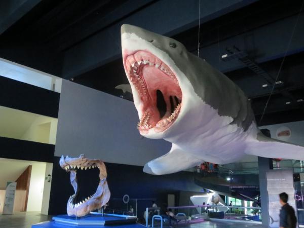 Por qué se extinguió el tiburón megalodón - ¿El tiburón megalodón existe todavía?
